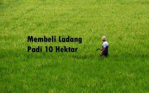 Ladang Padi 10 Hektar